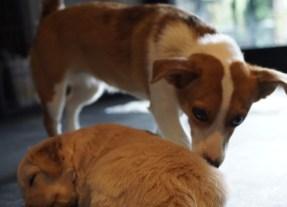 Pixel die gute Hundesitterin