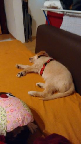 Grr: erstmal ne Runde schlafen und gertarnt einen neuen Plan aushecken!