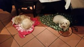 Brav bei Tisch mit italienischem Flair. Natürlich vorbildliche Hunde, die gelobt wurden.