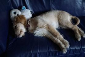 Lotta schlafend mit ihrer Eule