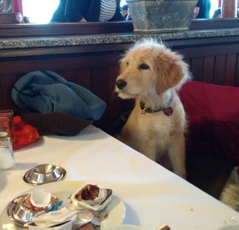 Zu Tisch im Kurhaus mit naßem Hund