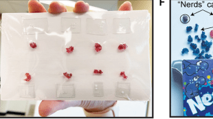 """image showing a student gripping a non edible molecule between their teeth and holding the string in their hand, another person showing molecule dummies sealed and arranged in a bag, a box of flavored edible candies in a """"nerd"""" box, and another set of edible white colored molecules in a tic tac box that's labelled n=287."""