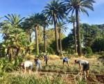 Projet MAIBLE : travail de la terre par les soldats blessés