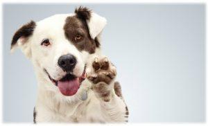 adopter-un-animal