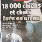 Triste record ….18000 chiens tués à la Réunion en 1 an