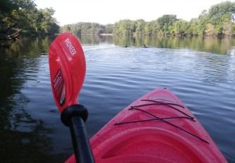 Following ducks upstream. (c) 2014 J.S. Reinitz