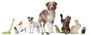 Mutuelle santé animaux Guadeloupe