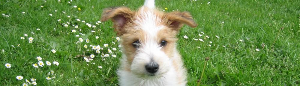 Bildresultat för bild hund vår