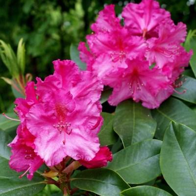 I blom