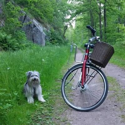 Att testa att cykla