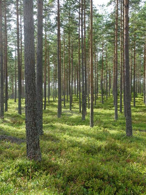 skogen-6