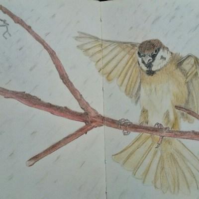 Ännu mera fåglar