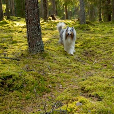 I skogen – igen :)