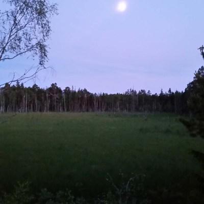 Sommarnatten