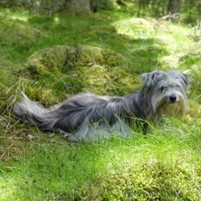 Skogen och hundarna