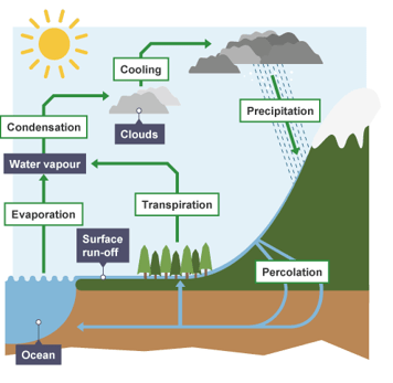 193 Nutrient Cycles A Biology