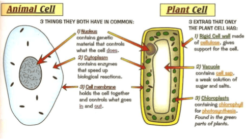 Cell structure and organisation • A* Biology