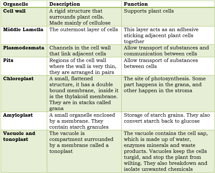Plant cell structure and plant stems • A* Biology