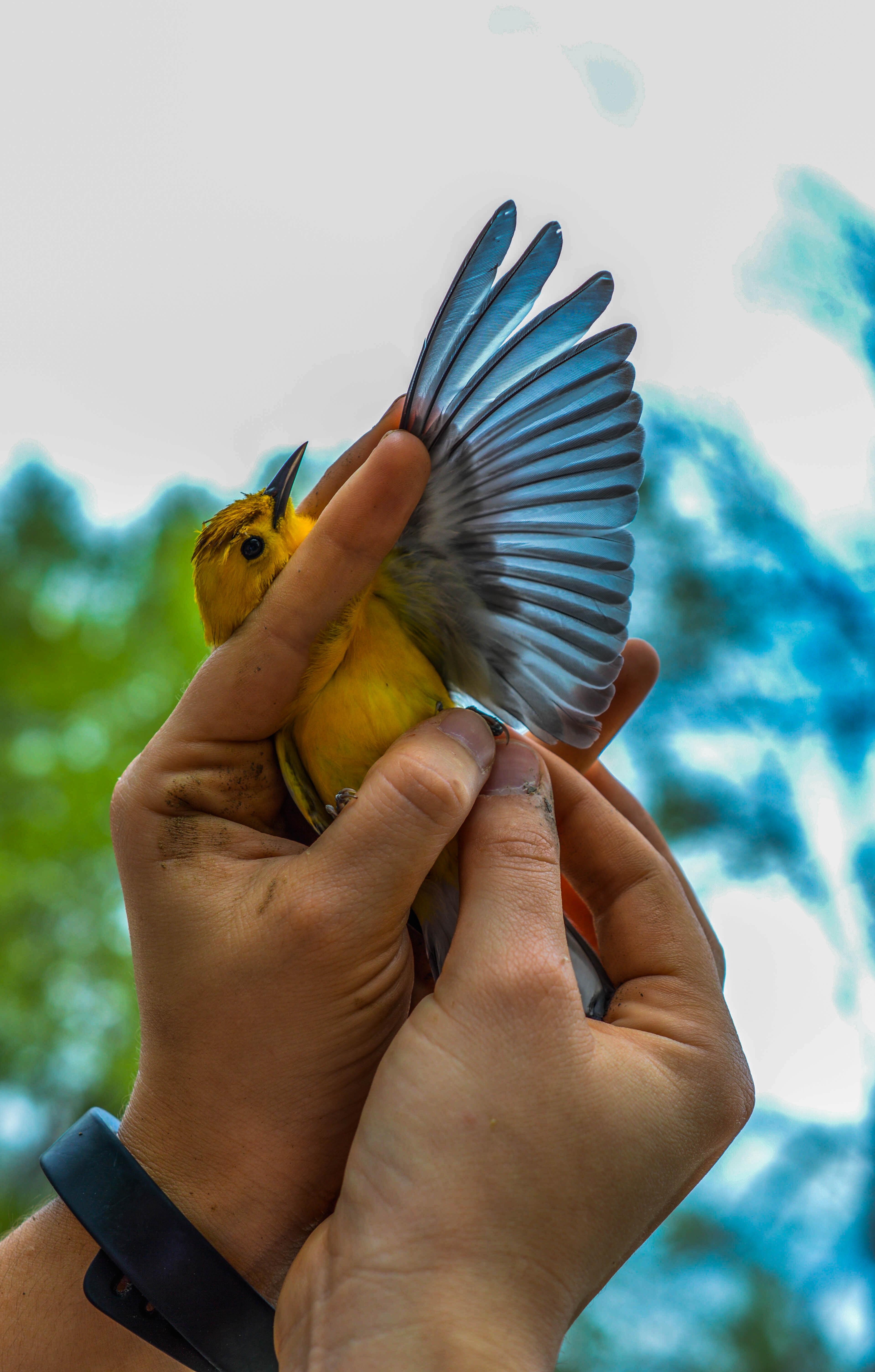 A Birds Paradise Arkansas State Photojournalism