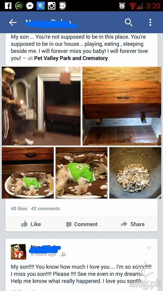 Facebook post showing Tyler the Shih Tzu dog being cremated
