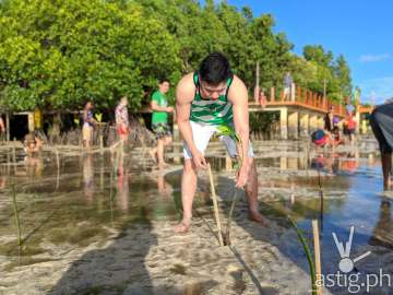 Boracay mangrove planting - Zenfone 5 photo by Den Uy of TechKuya_result