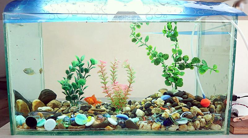 How to Make a DIY Aquarium at Home
