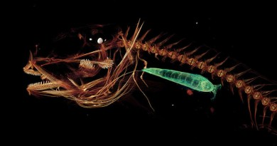 Deepest-ever Fish Recovered For The First Time