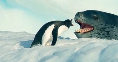 Tiny Penguin Makes a Deadly Dash From Giant Leopard Seal