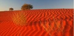 The Red Dirt of the Great Australian Desert