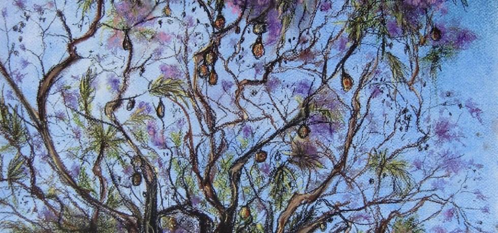 Jacaranda Boom (Marbella, Andalucia), pastel & conté op canvaspapier, 30,5 x 45,5 cm, 2013