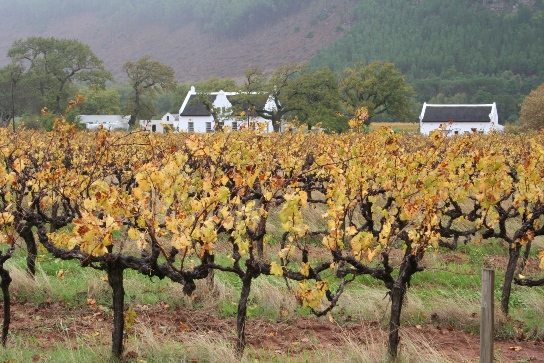 Franschhoek roads are lined with vineyards and Cape Dutch homes. Photo: Astrid Stark