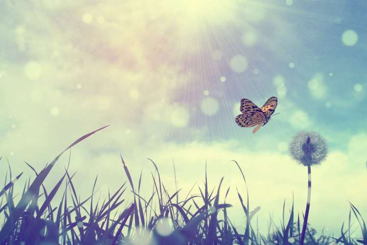 About Astro Butterfly Astrology