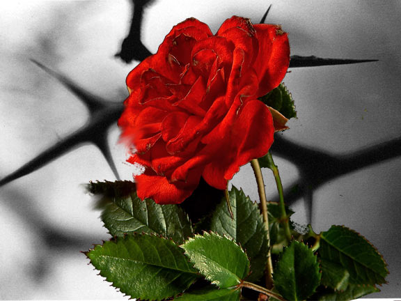 astrology-forecast-august-2020-roses-thorns