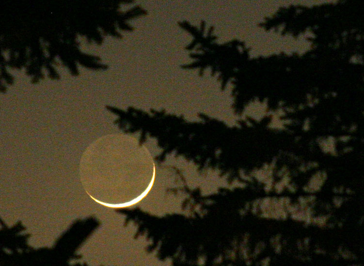 A glimpse of the moon through the trees, as it phases from new moon to cresent.