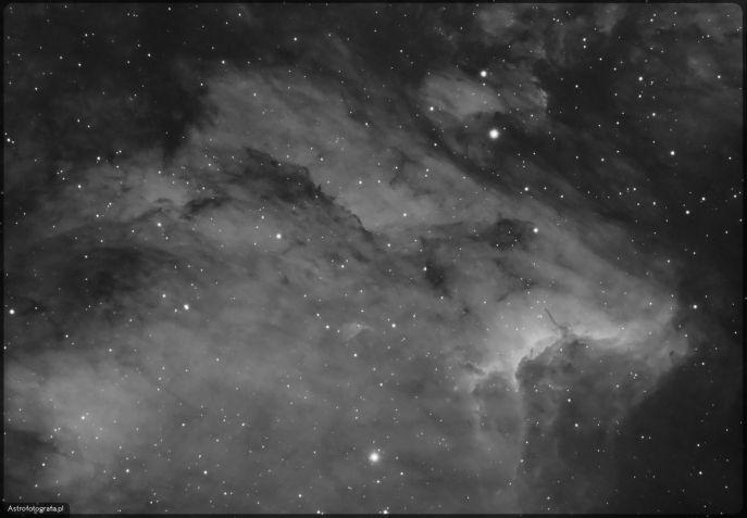"""Teleskop Celestron 80ED + TV 0,8x (480mm), SBIG ST2000XM - 4x900s Ha + 7x1200 Ha, montaż Takahashi EM200. Zazwyczaj fotografujemy obiekty, które dopiero wschodzą. Ponieważ kamerą można, focić (a w zasadzie należy bez względu czy aparatem czy kamerą) długie sekwencje dość istotnym problemem jest tzw. meridian flip - czyli przestawienie montażu po przejściu obiektu przez meridian. Rozwiązania jest wiele od bardzo drogich w postaci zakupu montaży AP (które posiadają specjalny mechanizm, dla którego przejście przez meridian nie powoduje cofnięcia, backslash na osi RA) po ta najprostszą, czyli fotografowanie obiektów do pewnego stopnia po przejściu przez """"sufit"""" (no chyba, że nasz setup nie zawadzi o nogę statywu) a następną część sesji kolejnej nocki. W przypadku kamery gdzie wyższa precyzja jest wymaga od prowadzenia po mechanikę naszej optyki (obwieszające się wyciągi, kiepskie dovetaile itp.), zrobienie flipu grozi tym - że całość może się nie poskładać jak należy, (czyli przesunięcie wad będzie lustrzane i zepsuje cała fotkę). No właśnie stosują to najprostsze rozwiązanie, czyli focenie obiektów od horyzontu do kawałek za meridian, i od kawałka przed meridian do horyzontu, jesień umożliwia nam eksploracje letnich gwiazdozbiorów z Łabędziem oraz Cefeuszem na czele. Stąd właśnie moje zainteresowanie Łabędziem a raczej jego częściami, które nie były dla mnie do tej pory dostępne."""