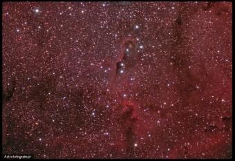 Teleskop Celestron 80ED + TV 0,8x (480mm), SBIG ST2000XM - 8x720s L 5x600 RGB (bin x2), montaż Takahashi EM200. Ciemna mgławica pyłowa Vdb142 potocznie zwana Trąbą Słonia to obiekt późnego lata i jesieni. Jeżeli chcemy sfotografować samą ciemną część mgławicy musimy użyć ogniskowej conajmniej 750mm (dla matrycy APS-C). Cały kompleks IC 1396 to przepiękna gromada otwarta otoczona obłokami wodorowymi, do pokazania jej wystarczy już ogniskowa w okolicy 300mm. Ponieważ cały ten obszar jest aktywnym regionem zastosowanie filtrów Ha znacznie poprawia kontrast i uwypukla ciemne partie tego obiektu.