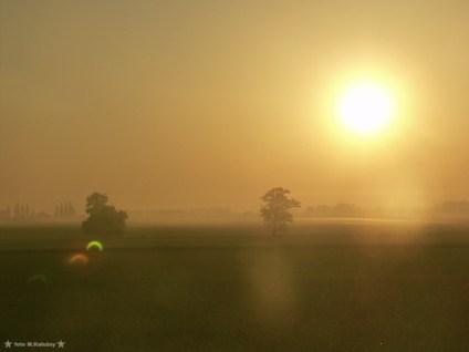 A to ciekawostka, w momencie kiedy nie było już można fotografować bez filtrów ograniczających dopływ światła, zrobiłem zdjęcie zaćmionego Słońca które po przejściu przez obiektyw tworzyło flary świetlne w kształcie zaćmienia. Olympus E20.