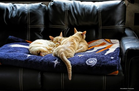 Nap time on the new sofa