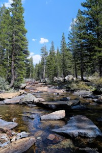 Creek in the Dana Meadows