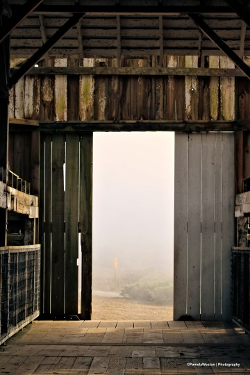 Point reyes doorB