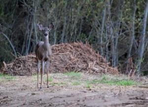 Curious Olema Park resident