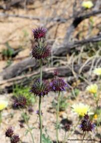 3-10-WildflowerLsign