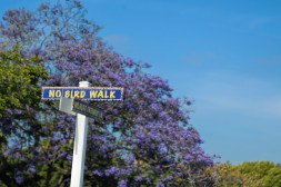 yup...No Bird Walk