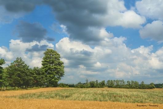 Farmers fields