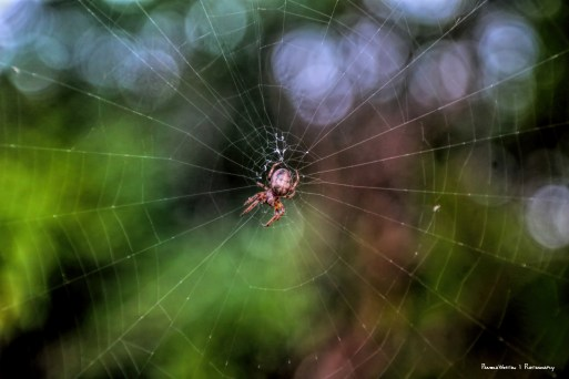 The lovely inhabitant of the web
