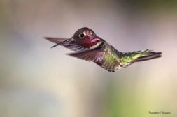 Love the pollen on his beak:)