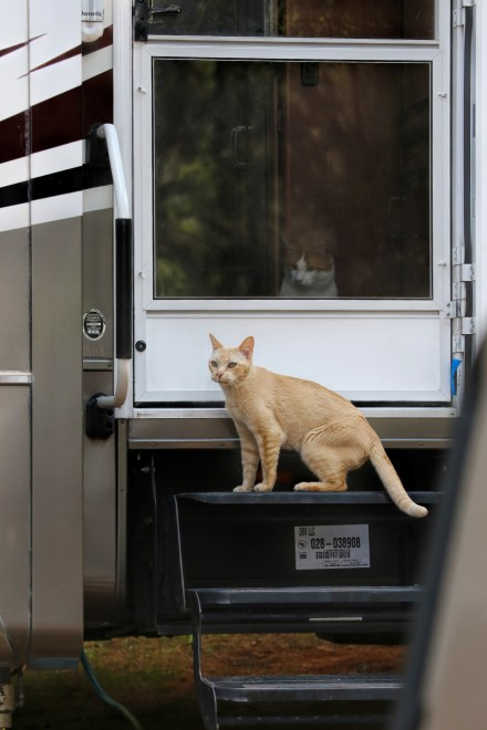 C'mon ya pussy, leave the safety of the trailer!