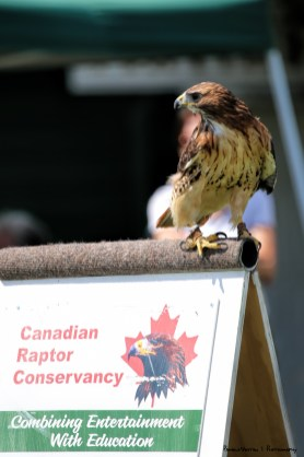 Amazing show of Rapters