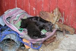 Kittens asleep in the sun