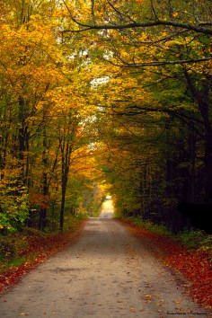 Beautiful Fall colours down a cottage road